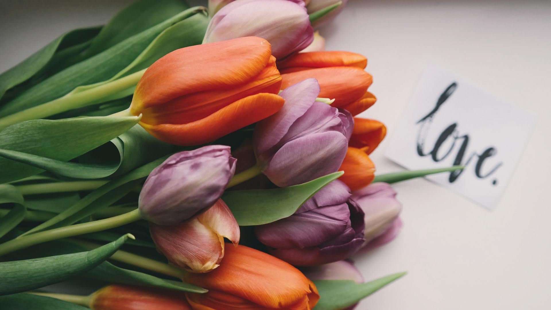 Veličanstveni tulipani